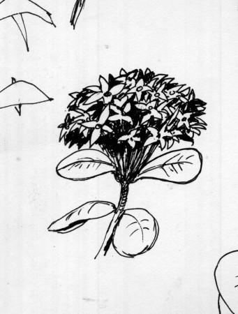 desenho-006